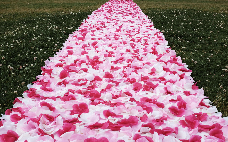 Rose Petals Carpet Love Tweet Love